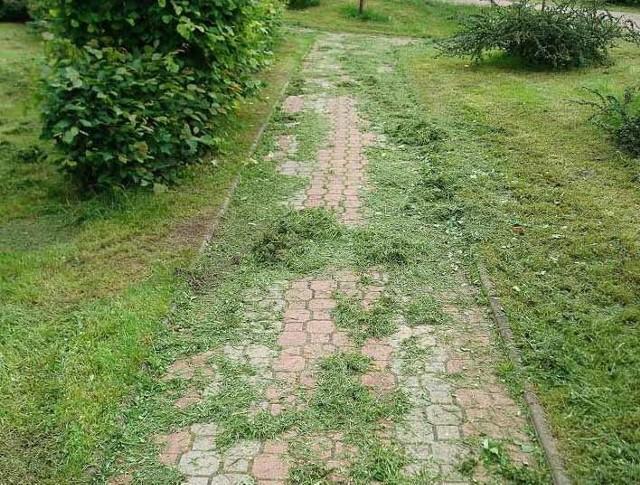 Skoszona trawa zalegająca na chodniku.