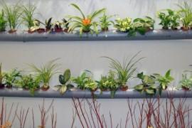 Zielone ściany Z żywych Roślin Kurier Poranny