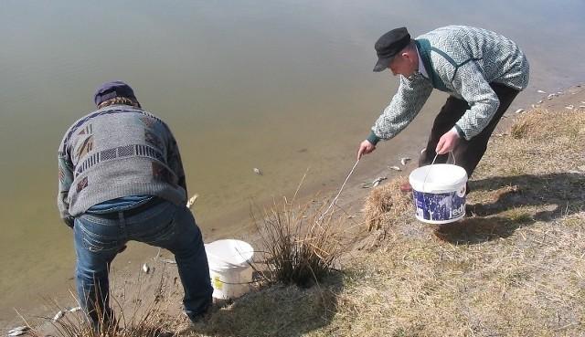 Po naszej interwencji na polecenie burmistrza pracownicy zbierają martwe ryby z brzegów kąpieliska w Łopuszcze Małej