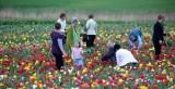 Majówki trwają w Wielkopolsce: Od Golec uOrkiestry po święto magnolii. Zobacz propozycje!