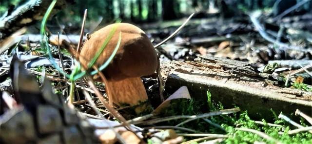 Gdzie na grzyby w Łodzi i okolicach. Lasy województw łódzkiego są pełne grzybów i rozradowanych grzybiarzy! Zobacz zdjęcia grzybów z okolic Poddębic, Sieradza i Bełchatowa!