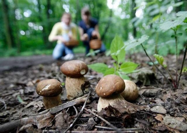 Gdzie na grzyby? Które grzyby są jadalne? O wszystkim dowiecie sie z naszego tekstu.