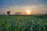 NIK przyjrzała się ubezpieczeniom upraw rolniczych. Państwowa pomoc po klęskach zniechęca rolników do kupowania polis?