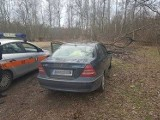 Straż Miejska w Łodzi ukarała mandatami po 500 zł za wjazd autem do lasu