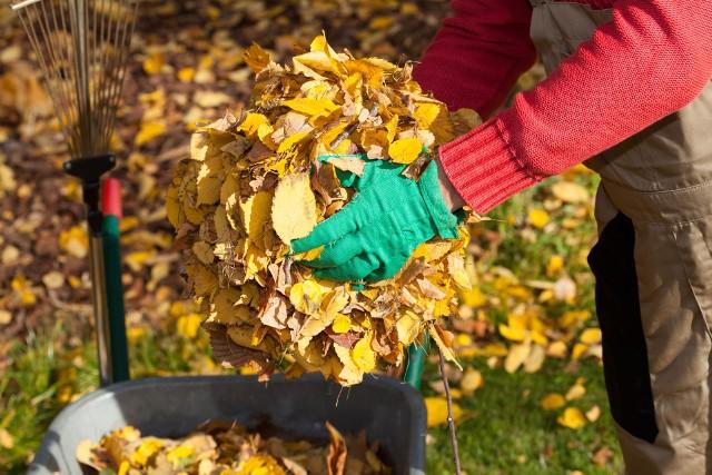 Opadające liście to część cyklu przyrody. Warto je wykorzystać z pożytkiem dla ogrodu.