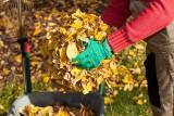 Tę świetną ziemię zrobisz z jesiennych liści. Podpowiadamy, jak ją przygotować nawet w małym ogrodzie i jak wykorzystać