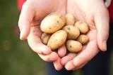 Biedronka będzie sprzedawać jedynie polskie ziemniaki i jabłka. Sieć sklepów Biedronka ugięła się pod presją?