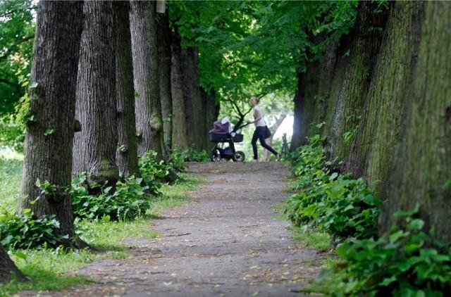 Pracę  na nowym stanowisku zaczyna we wtorek osoba, która ma dbać o miejską zieleń