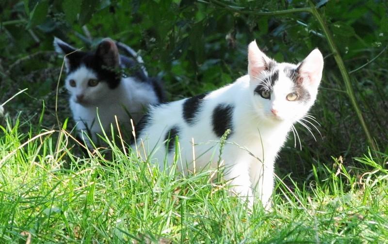 Nie pozwólmy umrzeć tym maluchom. Są ich w sumie cztery. Te, których nie ma na zdjęciu są niemal identyczne. Natomiast trzy dorosłe kotki mają białą sierść.