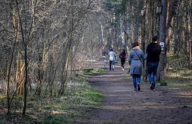 Nadmorskie tereny pełne spacerowiczów. Tak było 28.03. na Wyspie Sobieszewskiej w Gdańsku