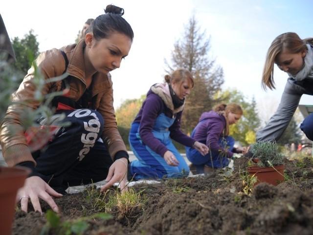 Bożena Strześniewska z koleżankami i panem Janem, ogrodnikiem z DPS, posadziła wczoraj ponad 50 sadzonek róż i lawendy.