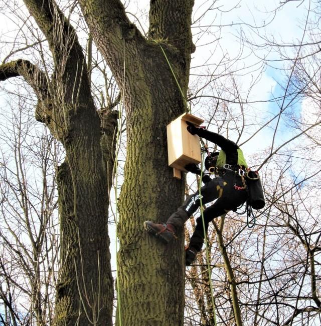 Budki dla ptaków i nietoperzy zostały umieszczone w krzeszowickich parkach