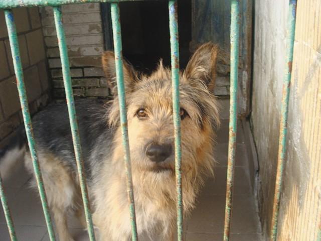 Prawie wszystkie psy przebywające w schronisku, to ofiary ludzkiej bezmyślności, a często też okrucieństwa