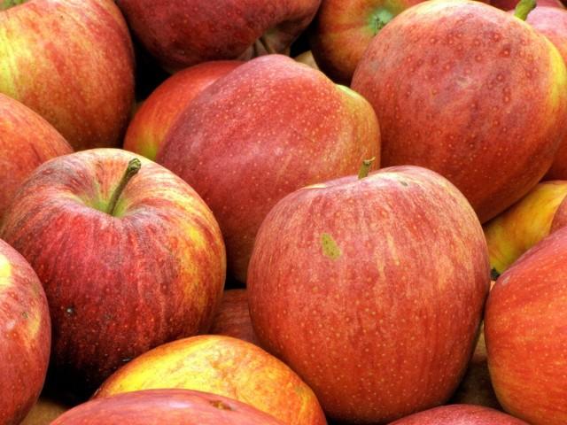 Jabłka znowu pod kreską. Trudny rok dla sadownikówAdam Piszczek: - Zła sytuacja na rynku jest odczuwana nie tylko przez mniejszych producentów jabłek, ale i tych silniejszych