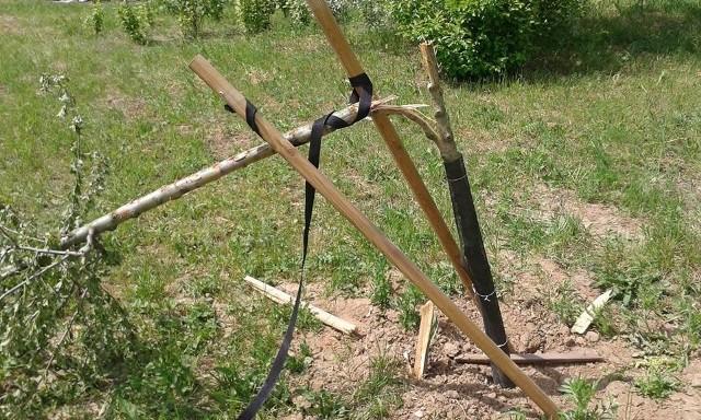 Wandale zniszczyli drzewka i stabilizujące je paliki, powyrywali krzewiny poziomek