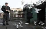 Gołębiarz z... Bałut [zdjęcia]