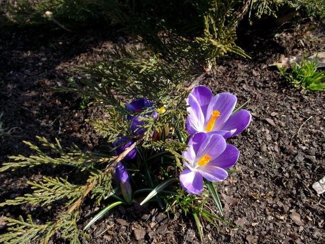Zdjęcie wiosny.
