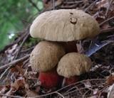 ATLAS GRZYBÓW 2021. Grzyby trujące opis i zdjęcia. Tych grzybów absolutnie nie jedz! [TOP 15] [26.09.21]