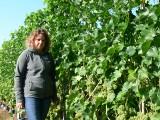 Sandomierscy winiarze przygotowują się do tegorocznych zbiorów. Zapowiada się wyjątkowo dobry rok. Dlaczego? [ZDJĘCIA]