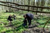 Wielkie sprzątanie w Białymstoku. Wolontariusze zbierali śmieci w lasach (zdjęcia)