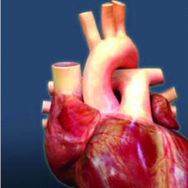 Prawie 1700 ciężko chorych czeka na organy. Od początku roku na liście biorców przybyło 128 pacjentów. Ilu zmarło?