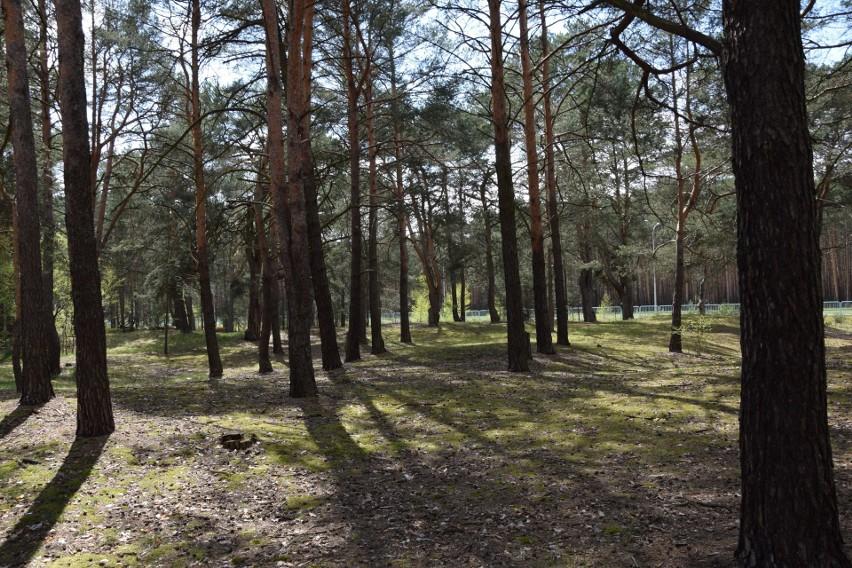 W sobotę, 8 maja  w lesie nie było ani jednego papierka, co...