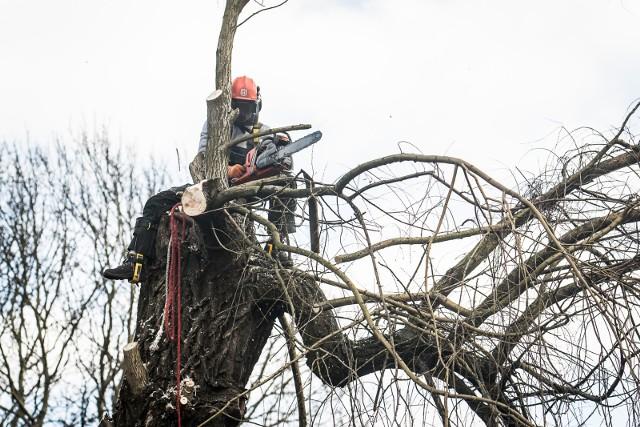 Wycinka drzew trwa w całej Polsce od początku roku