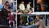 Szopka z żywymi zwierzętami na Rynku w Kruszwicy [zdjęcia]