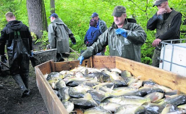 W tym roku  z powodu suszy hodowcy odłowili o kilkanaście procent mniej karpia. W sklepach za żywą rybę trzeba zapłacić około 15 zł/kg, za dzwonka około 24 zł,  a za filety - 36 zł/kg.