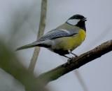 Zima trzyma, a ptaki w Łodzi śpiewają coraz głośniej. Powrót ptaków z zimowisk może się opóźnić