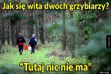 """""""Tutaj nic nie ma"""", czyli Janusz na grzybach. Zobaczcie najlepsze memy!"""