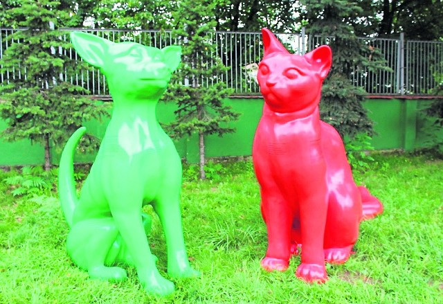 Schronisko w Poznaniu: Poszukaj zielonego psa i czerwonego kota!