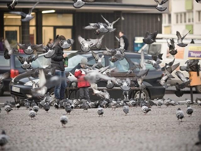Część mieszkańców uważa, że nie powinno się dokarmiać gołębi.