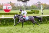 Polski koń wygrał ponad 2 mln zł! Fazza Al Khalediah trenuje na co dzień we Wrocławiu!