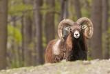 Koronawirus uderza w zwierzęta. W trudnej sytuacji są m.in. Leśny Park Niespodzianek, Sokolarnia na Czantorii i Zagroda Żubrów