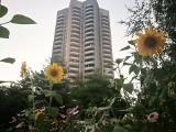 Bajkowe ogródki przy blokach to śląska specjalność. Rosną tu słoneczniki, floksy, maki, są skalniaki