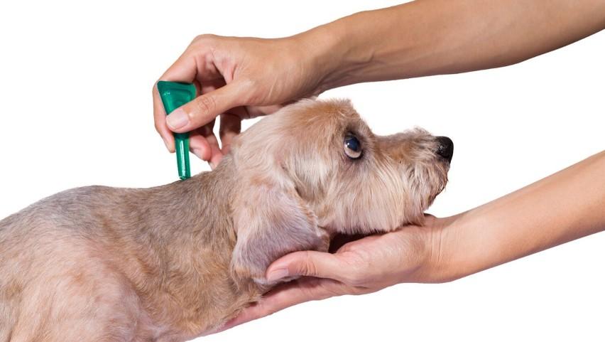 Upewnij się, że twój pies jest chroniony przed komarami,...