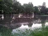 Rzeka Biała. Park Wierzbowa pod wodą (zdjęcia)