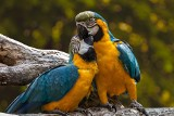 Papugi, bażanty lub bociany. Jakie okazy ptaków możesz kupić w województwie lubelskim? Zobacz oferty
