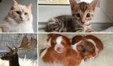 Najdroższe zwierzęta do kupienia w Małopolsce. Za niektóre z nich wydasz fortunę [OFERTY]