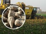Bardziej gorzko niż słodko. Rozmowa o sytuacji plantatorów buraka cukrowego - Welconomy Toruń 2019