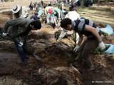 Puszcza Knyszyńska: Studenci z zagranicy sadzą las (zdjęcia)