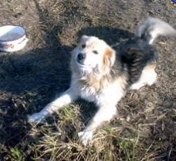 Ten wspaniały i przyjacielski pies został już zabrany z podmokłego pola i przebywa otoczony opieką. Dzięki dokładnemu zgłoszeniu (opis + zdjęcia) nasz Inspektorat mógł podjąć natychmiastowe i skuteczne działania. Osobie zgłaszającej sprawę - serdecznie dziękujemy !