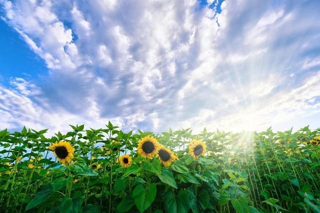 Piątek słoneczny. Lokalnie może padać i grzmieć. (Zdjęcie poglądowe)