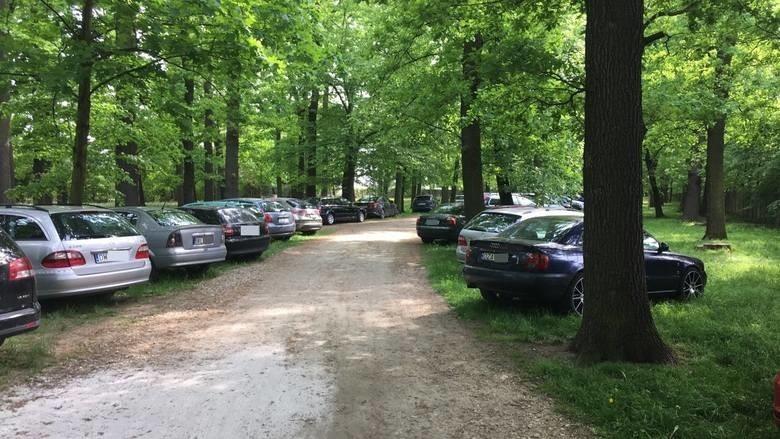 Parkowali na trawnikach i w parku przy zoo. Posypały się mandaty. Będą nowe słupki (ZDJĘCIA)