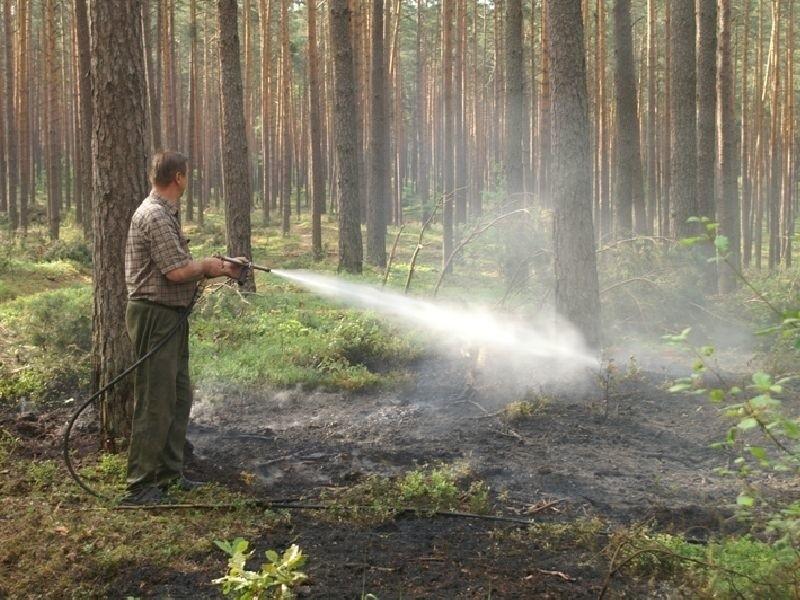 Leśniczy gasi płonącą ściółkę, która zapaliła się po zaprószeniu ognia przez turystów.