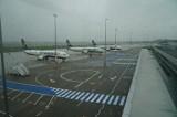Wycinka drzew przy Ławicy spowoduje większy hałas z lotniska także na Woli? To może oznaczać nową falę pozwów