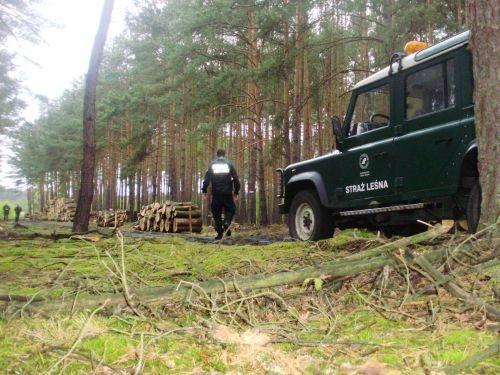 Wspólne patrole sławskich policjantów i strażników leśnych odbywają się na terenach leśnych w okolicach Sławy Śląskiej z wykorzystaniem samochodów terenowych.
