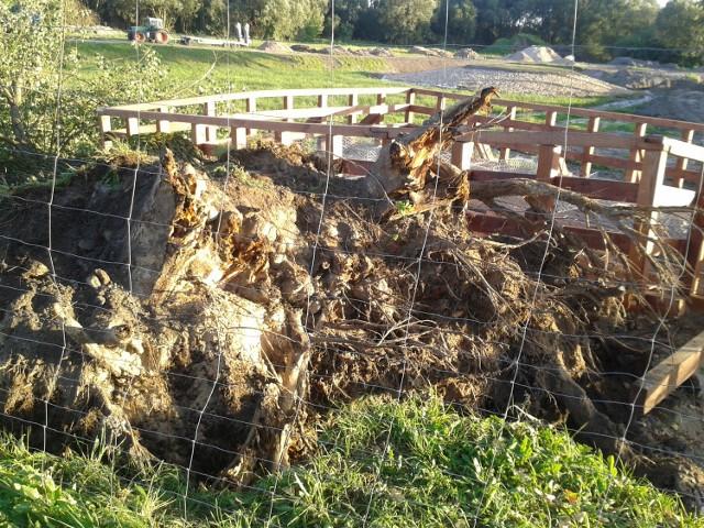 We wtorek, 30 sierpnia niezbyt silny wiatr powalił drzewo przy Stawach Marczukowskich. Na szczęście zniszczyło tylko część pomostu. Ale co by było, gdyby ktoś tamtędy przechodził?  - zaalarmował nas Czytelnik Adam Karolak. I przysłał zdjęcia powalonej topoli.