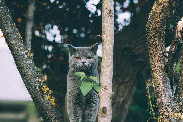 Sądzisz, że wiesz o swoim kocie wszystko? Często podczas badań okazuje się, że 3/4 właścicieli kotów mylnie interpretuje subtelne sygnały od swoich zwierzaków.